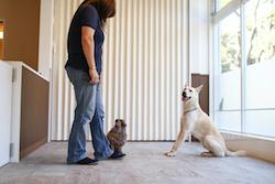 トレーニング(犬のしつけ)