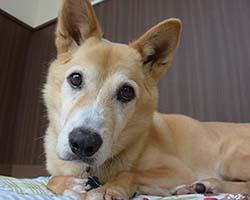 シニア犬 シニアサービス