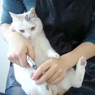 猫ちゃん爪切りの様子