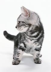 猫 トリミング