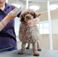 犬の爪切り、肛門腺絞りなどの部分ケア